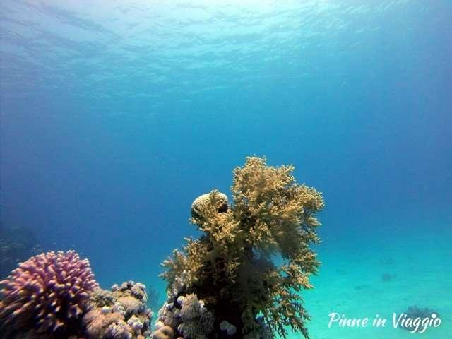 Barrire corallina marsa alam