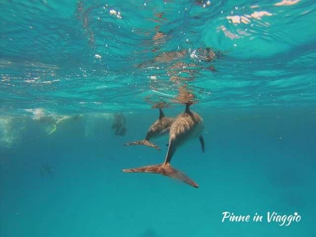 Delfini In Egitto