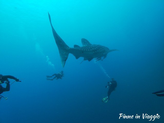 squalo balena dove vederlo