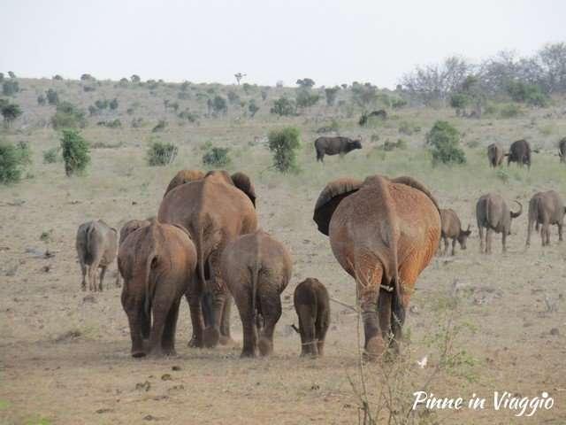 Elefanti safari in kenya