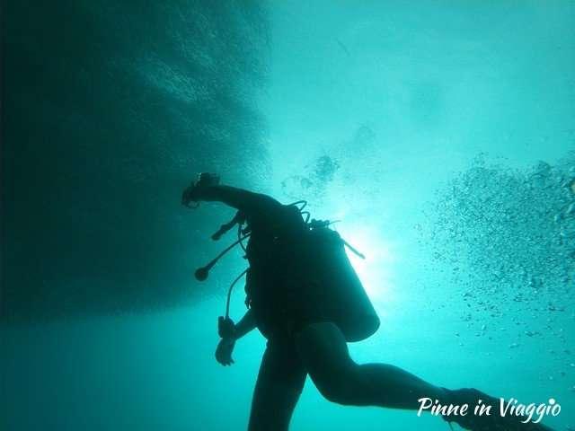 immersione con le sardine