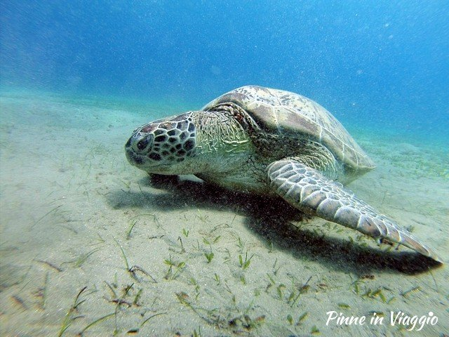 incontrare le tartarughe