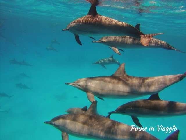 Delfini a Marsa Alam