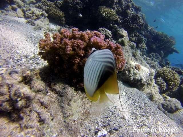 pesci a marsa alam