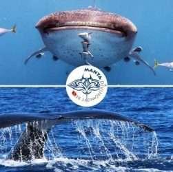 Squali balena e megattere