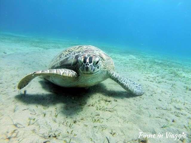 tartarughe marine