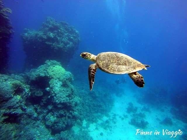immersione con le tartarughe