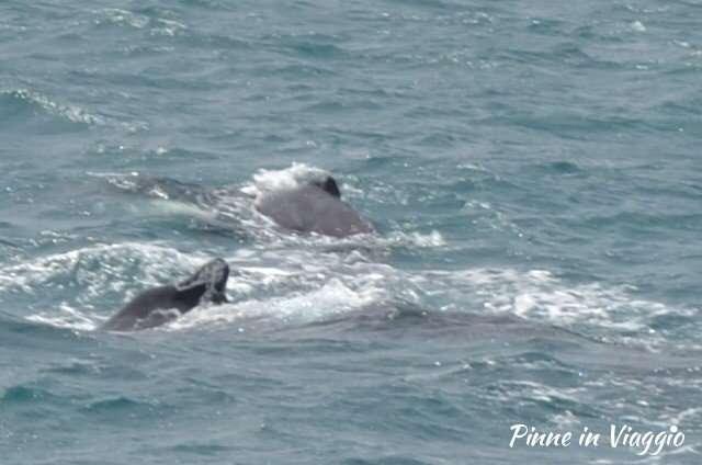balene boavista