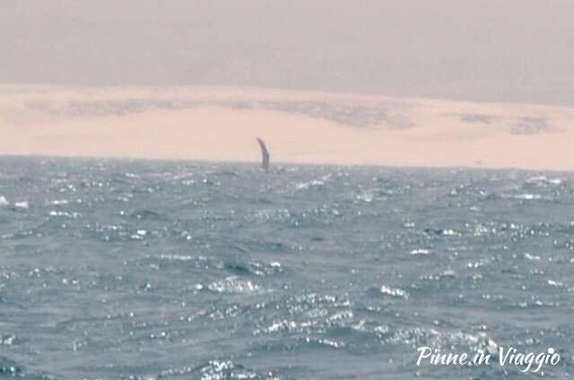 tour balene boa vista