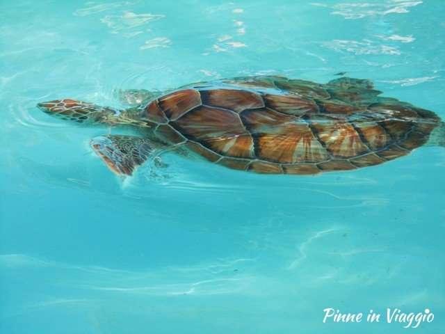 tartarughe marine cayo largo