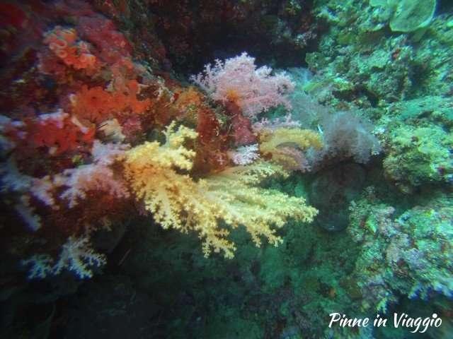 diving savedra
