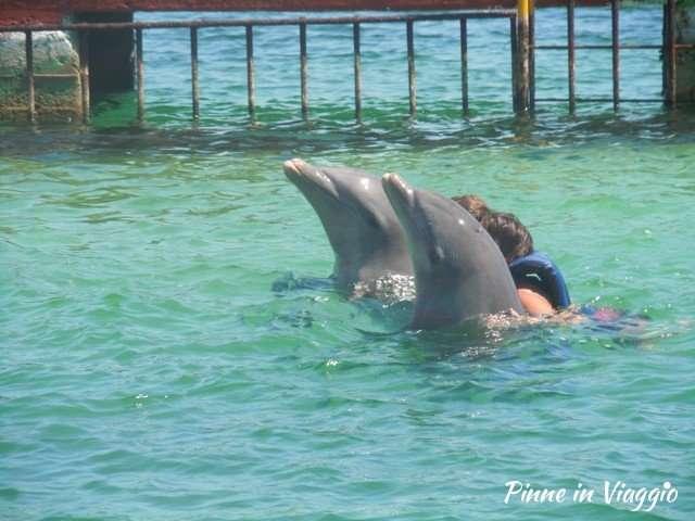 delfinario cayo largo