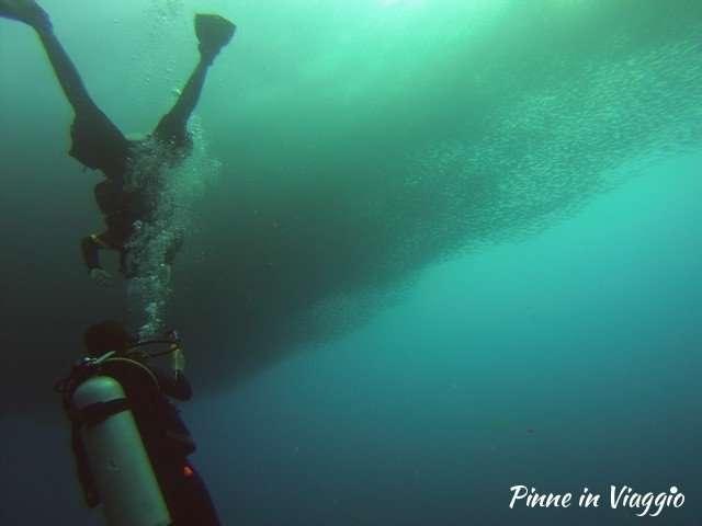 banchi di sardine