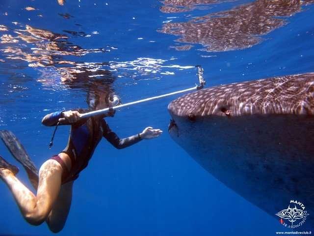 squalo balena snorkeling nosy be