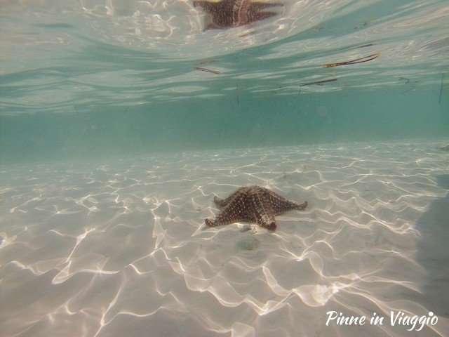 stella marina playa sierna