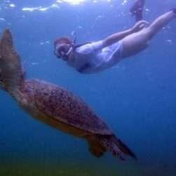 tartaruga nosy be