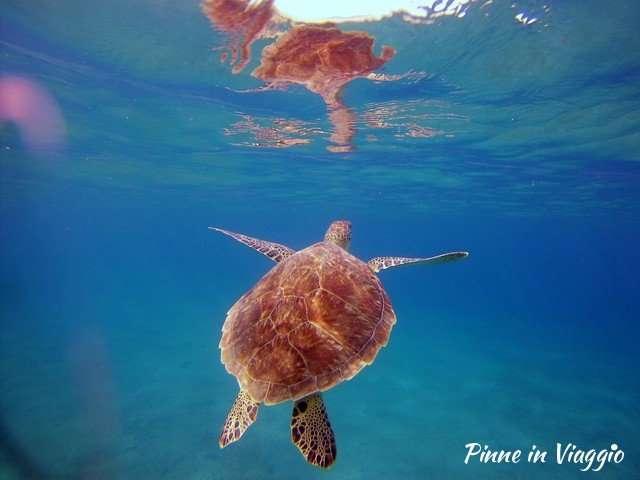 snorkeling con le tartarughe